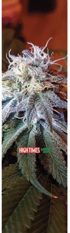"MOB High Times - Headband - Griptape 9""x33"""